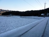 雪積もりました