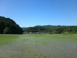 田んぼのある風景 昼